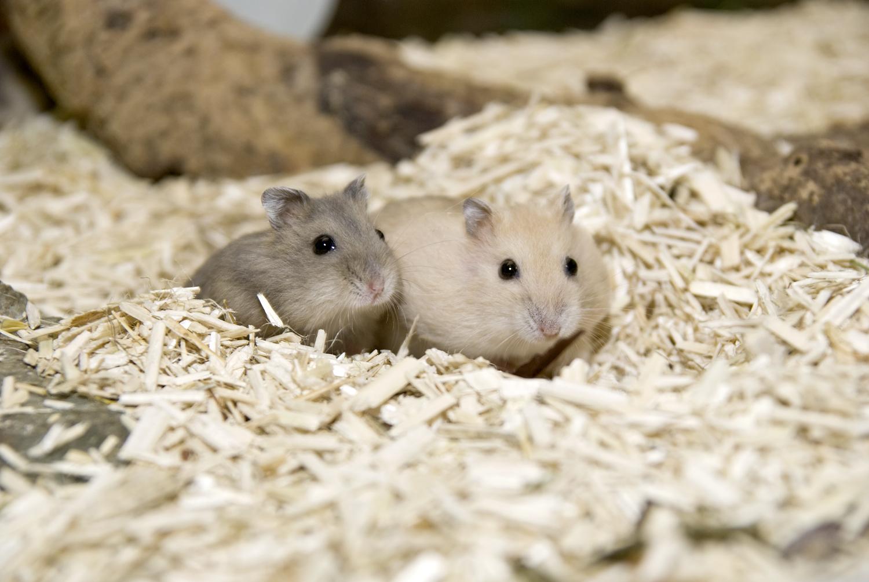 Hamster_20090127_0038