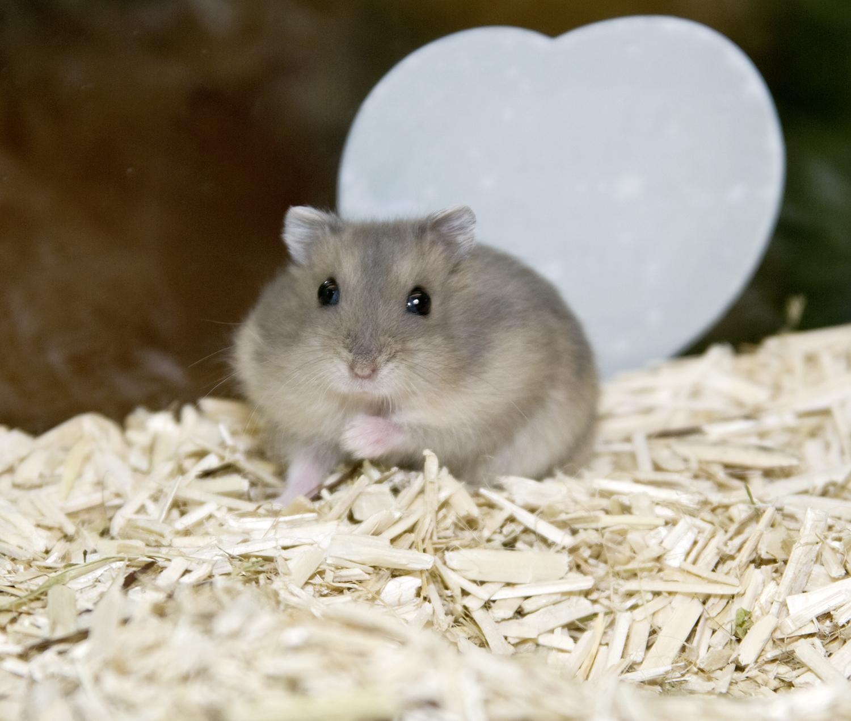 Hamster_20090127_0063