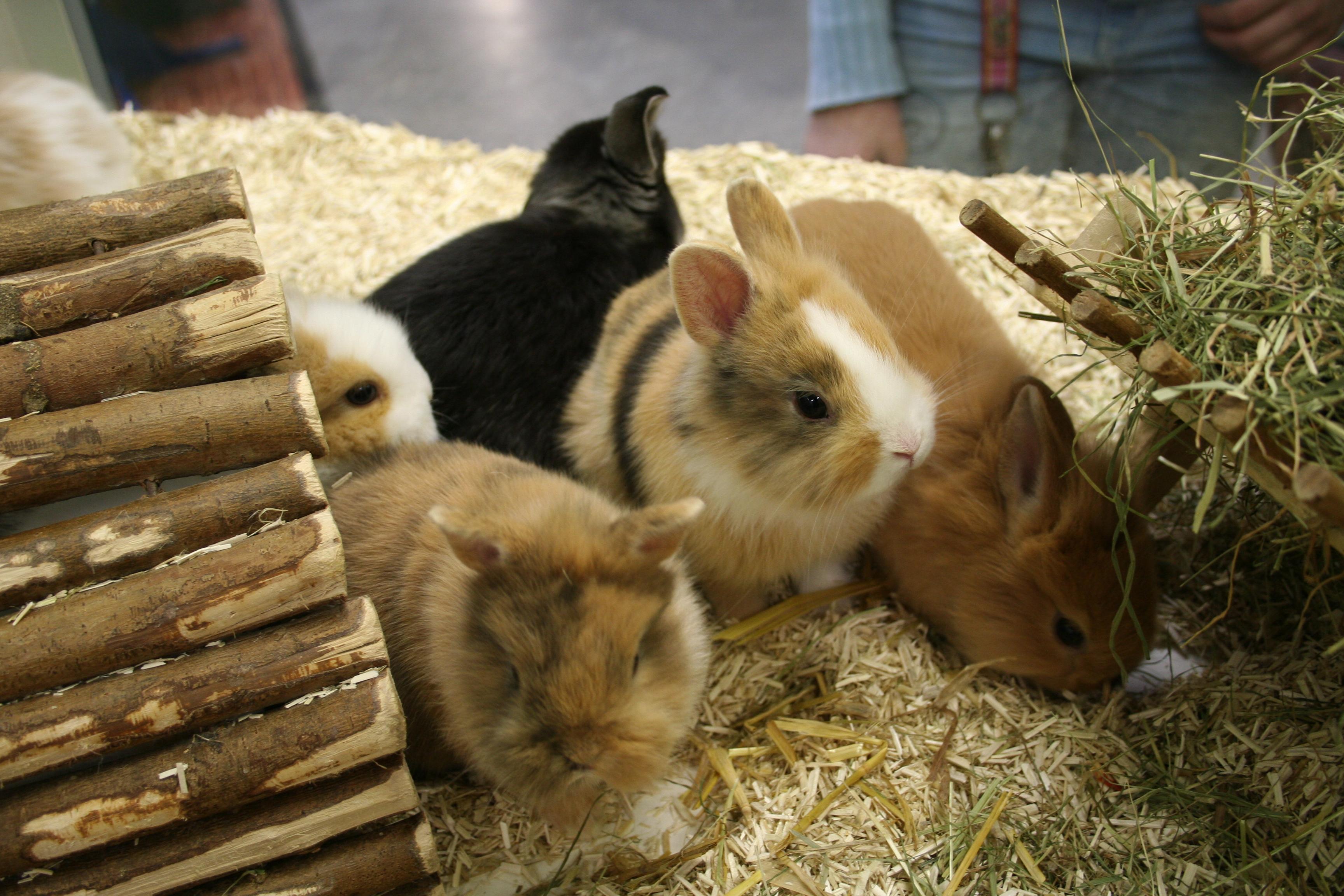 Kaninchen5